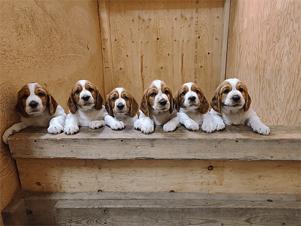 6 cute puppies